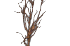 Single reconstructed neuron
