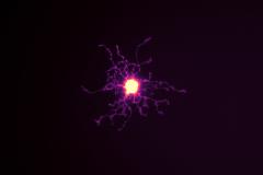 Oli--glow--dendrocyte
