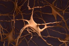 Neocortical network