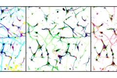 Neurons à la Warhol