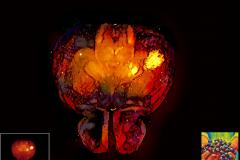 Cleared Brain Neural Art