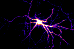 Motor neurons in action