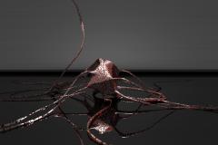 Neuronal apotosis