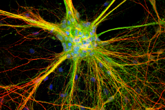 Neuro Web
